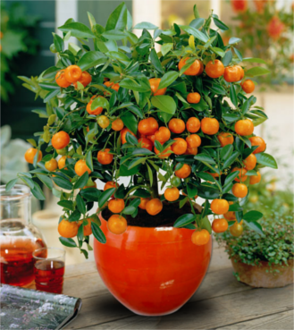 Orange planter pots